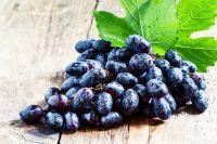 OPC-Traubenkernextrakt: Jung bleiben und alt werden mit dem stärksten Antioxidans der Welt