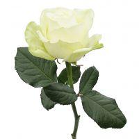 Abschied nehmen mit virtuellen Blumen