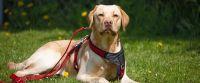 Erfolgreiches Hundetraining  in Bayern mit Auzeichnung