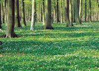 Ostee Urlaub: Frühlingstraum im Küstenwald