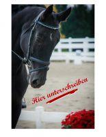Pferden nicht das Maul verbieten: Petition an die FN erreicht schon über 6.000 Stimmen