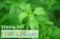 100% Süß-0% Kalorien, Stevia beim Online Markplatz Froschking