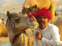 Kamele sind auch heute noch sehr wichtig in Rajasthan