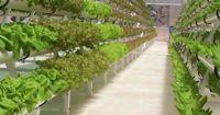 Eco Energy Tech Asia Ltd. – Die Zukunft der Landwirtschaft