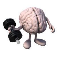 Gehirn- und Gedächtnistraining, nicht nur für Hochbegabte