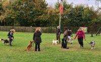 Hundetrainer müssen Experten in der Mensch-Hund-Kommunikation sein und auch mit Hundehaltern professionell kommunizieren können.