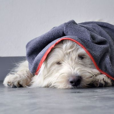 Nach dem Schwimmen schön kuscheln mit dem Hundehandtuch von piccobello