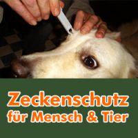 Zeckenzange im Einsatz beim Hund