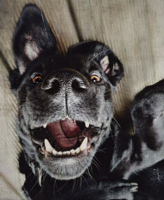 Hundeerziehung, ziemlich einfach