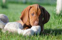 Hundeschule Satke - Hundeausbildung beim Profi für Junghunde und erwachsene Hunde