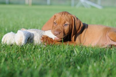 Hundehotel, Hundeschule und Hundeinternat Satke
