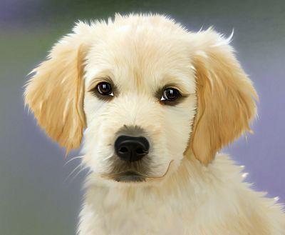 Hunde würden Dog-Domains kaufen....