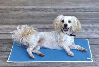 Inkontinenz-Auflage für Hunde und Katzen von piccobello