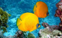 Osmoseanlage auch für Aquarium