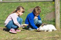 Kinder füttern das Kaninchen im Kuschelzoo bei Backhaus-Cafe in Drolshagen
