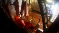 Aufgedeckt: Bildaufnahmen belegen Tierquälerei in mit Videoüberwachung ausgestattetem Schlachthof