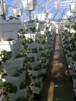 ECO Energy Tech Asia Ltd. erste erfolgreiche Anpflanzungen