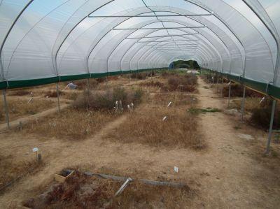 Versuchsfläche im Ökologisch-Botanischen Garten der Universität Bayreuth zur Simulation extremer Trockenheit