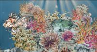 Korallenriffe gehören zu den artenreichsten Biotopen der Welt