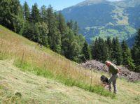 Prof. Dr. Carl Beierkuhnlein untersucht Bergwiesen am Venet im Pitztal in Tirol. Sie haben eine mittlere Produktivität