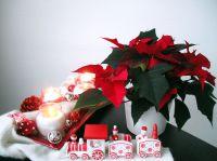 Weihnachtsdekoration und Weihnachtsstern