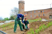 Gärtnermeister Karl-Josef Schmitz (l.) und sein Azubi Philipp Schmitz bepflanzen den Rosengarten.