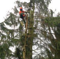 Baumfällung in Velbert