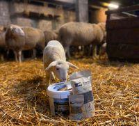 Biodünger aus Schafwolle - Gärtnern im Einklang mit der Natur