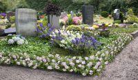 Bloombux® Nugget - ein Blütentraum im Sommer auf dem Grab