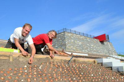Daniel Schröder (l.) und Ruddi Matthys von der Firma Glasmacher & Söhne KG bepflanzen die Römerbastion.