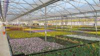 Die Pflanzenproduktion von Gartenbau Salzwedel erstreckt sich auf 22 ha Freifläche sowie auf 10 ha Gewächshausfläche.