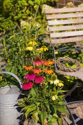 Sonnenhut  'Kleine Auszeit' von Landgefühl® für die farbenfrohe Terrasse