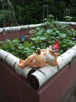 Kuriose u. interessante Links über das Leben in Deutschlands Schrebergärten (Kleingärten).