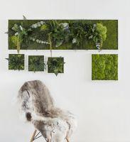 Pflanzenbilder aus konservierten Pflanzen