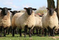 Ökologischer Gartenbau mit der Langzeitwirkung von Schafwoll-Pellets
