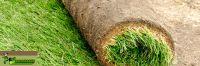 MH Rollrasen - Ihre Experten für Fertigrasen in jeder Gartensituation