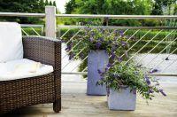 Sommerflieder Summer Lounge® blau mit Balkonsessel