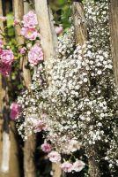 Schleierkraut 'Perlenpracht' von LANDGEFÜHL® als Rosenbegleiter im Bauerngarten