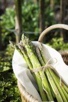 Frisch geerntet aus dem eigenen Garten, Grüner Landspargel von LANDGEFÜHL(R)