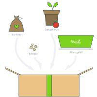 Die Komplettbox von Balkongemüse