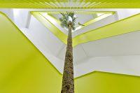 Palme - Trachycarpus wagnerianus - im Treppenhaus als Begrünung - Bild und Projekt - Botanic International