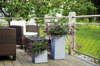 Balkonbepflanzung mit Sommerflieder Summer Lounge® in pink