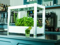 GreenUnit 2.0 Zimmergewächshaus mit frischen Kräutern in einer Bar