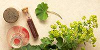 Die Lieblingspflanze der Alchemisten als Zauberkraut für die Wechseljahre