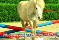 Horse Assisted Coaching – Führen ohne Scheuklappen