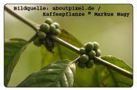 Bildquelle: aboutpixel.de Kaffeepflanze © Markus Nagy