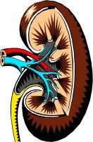 Rundum versorgt bei Nierenerkrankungen
