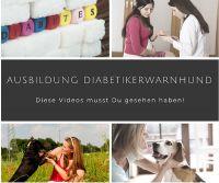 Diabetikerwarnhund