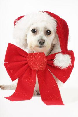 """Der Werbetherapeut ist überzeugt: Händler bleiben """"arme Hunde"""", wenn Sie sich nicht um Ihren Weihnachtsumsatz kümmern"""
