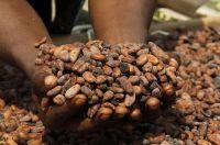Lebkuchen-Schmidt stellt komplett auf Fairtrade-Kakao um